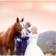 wedding horses, integrity stables, julian, california, sacred mountain, Julian weddings, weddings with horses near San Diego, San Diego weddings with horses, horse rentals for weddings in San Diego, San Diego wedding photographers, horse themed wedding